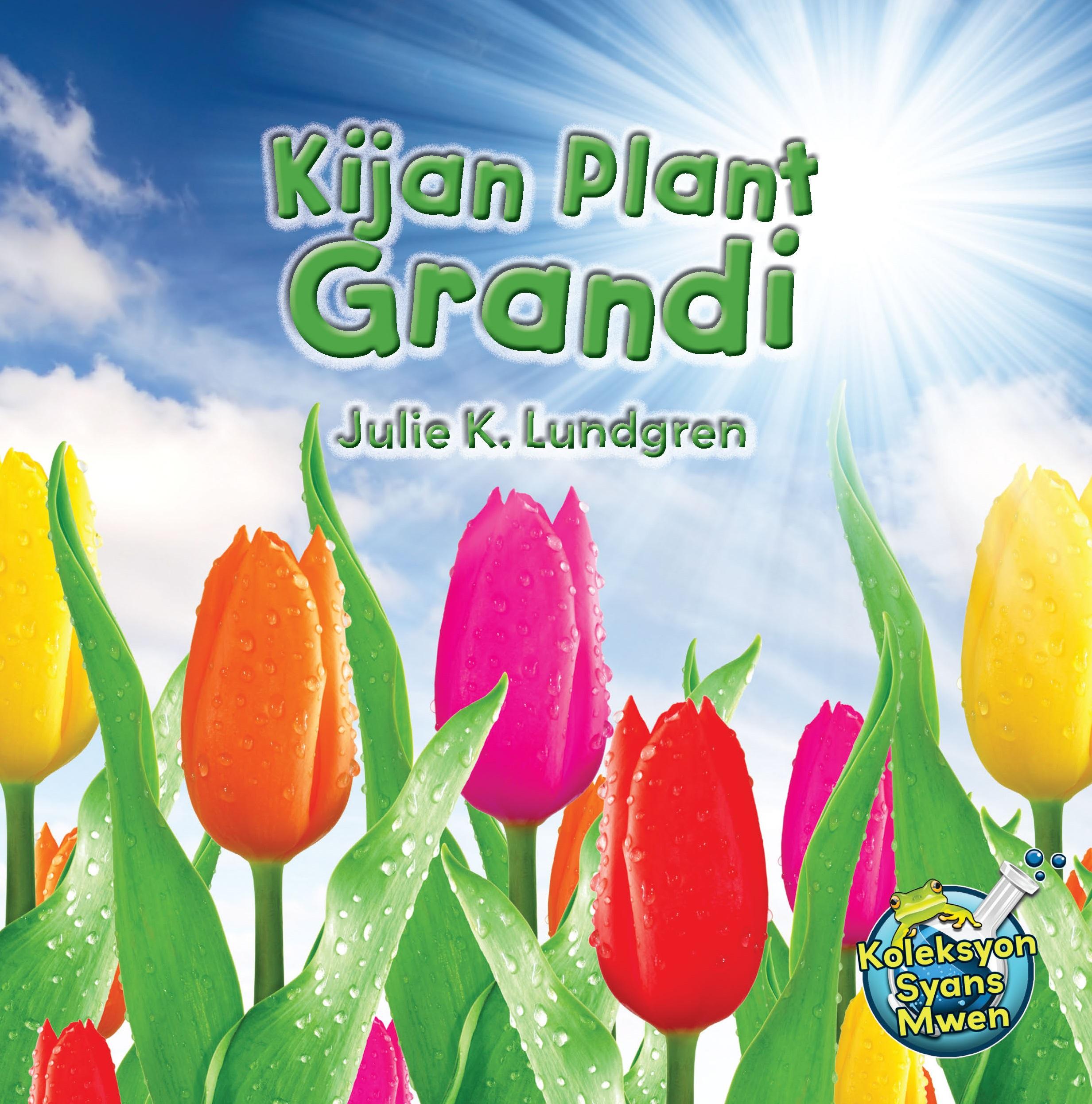Kijan Plant Grandi