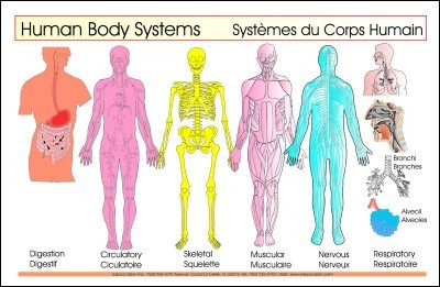 Body Systems (Inside) 6