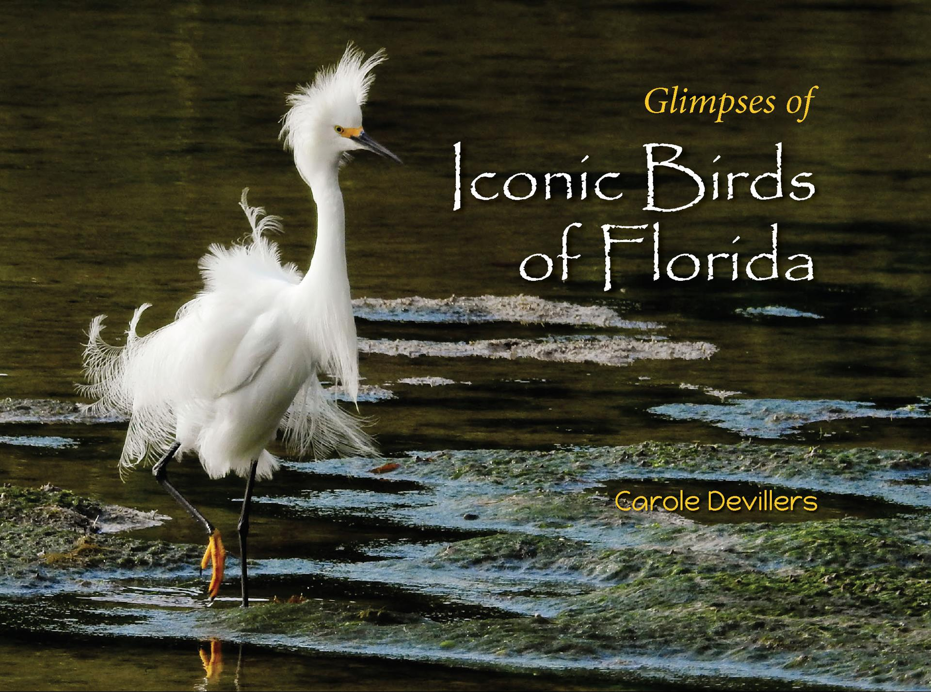 Glimpses of Iconic Birds of Florida