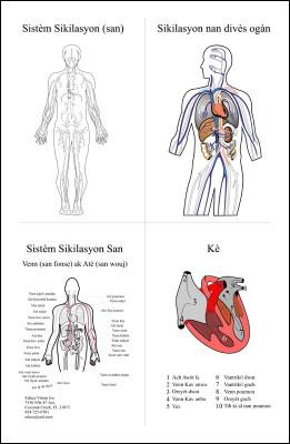 Chart: Circulatory System